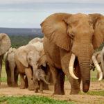 Addo elephant national park en Afrique du Sud