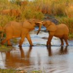 Elephants durant un safari au parc Kruger voyage Afrique du Sud