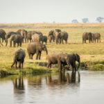 Venez découvrir le Parc Chobe au Botswana