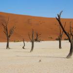 deadvlei sossusvlei Voyage Namibie