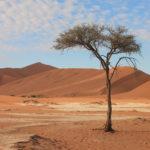 dunes sossusvlei voyage namibie