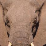 faune Voyage Namibie