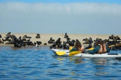 Voyageurs voguant au milieu des otaries dans un kayak double place à Pelican Bay en Namibie