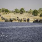 Safari Botswana Elephant à Chobe