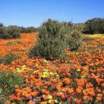 Namaqua national park en Afrique du Sud