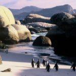 Penguins Boulders Beach voyage Afrique du Sud