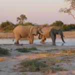 Elephant Kruger voyage Afrique du Sud