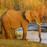 Elephant au Parc Kruger Voyage Afrique du Sud